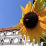 SLOVENIA OLIMJE WITH SUNFLOWER