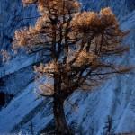 SLOVENIA A TREE