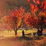 CROATIA_MEDITERRANEAN_AS_IT_ONCE_WAS_CTB (22)