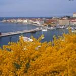 PIRAN IN FLOWERS